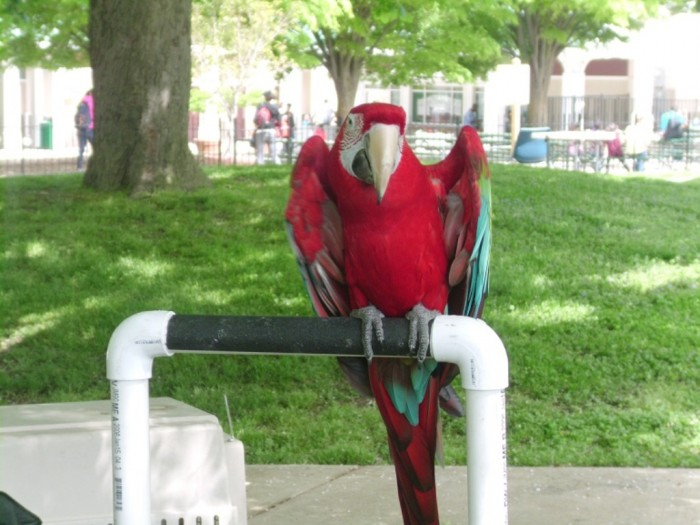 Baltimore, Maryland Parrot-one-of-the-birds-at-the-Maryland-Zoo-in-Baltimore-.-Image-courtesy-of-ArtcentronKZ