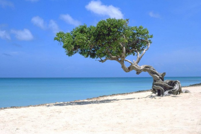 Most-beautiful-Caribbean-beaches-in-Aruba
