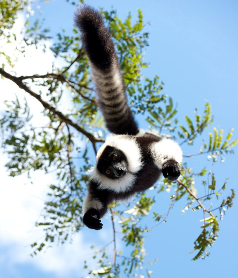 island of lemurs madagascar01  Top 10 Movies of 2014 for Kids