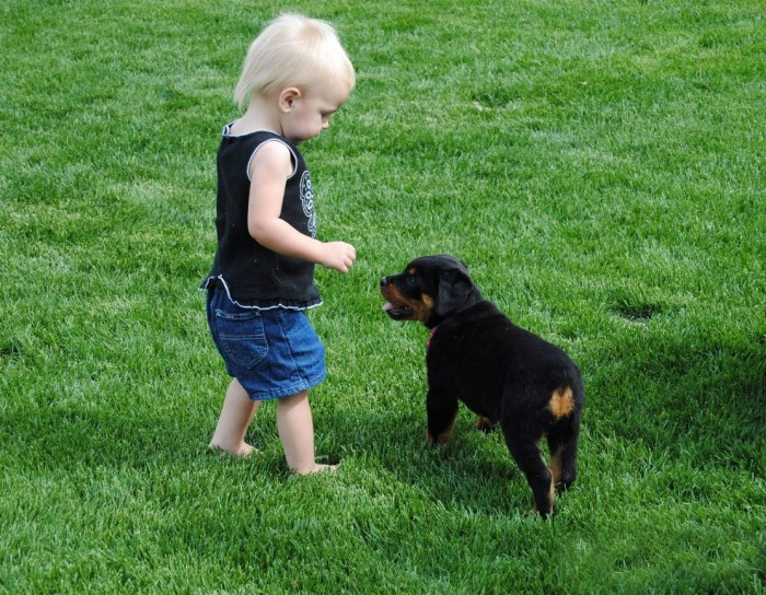 rottweiler-puppy-with-baby