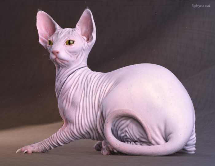 Top 10 Most Expensive Cats
