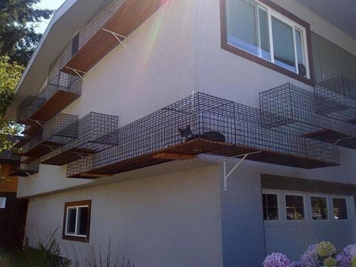 Catwalk around your house