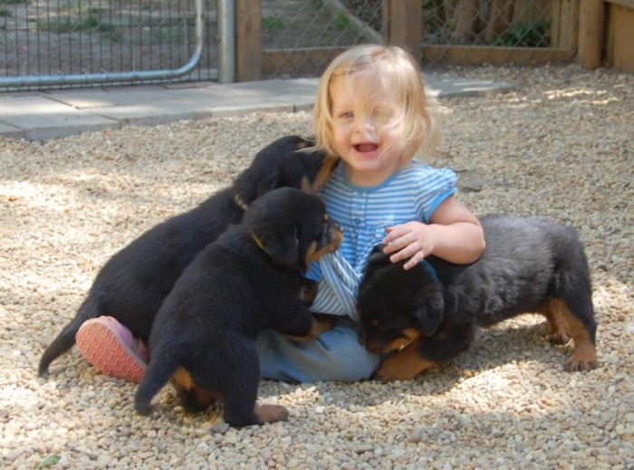 aeva_rottweiler_puppies_socialization_01