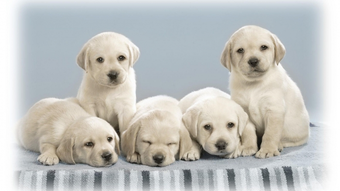Photo of Top 10 Popular Dogs in the World