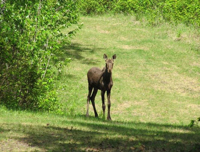 Strathcona County, Alberta