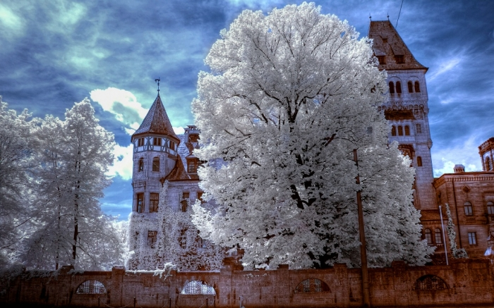 Transylvania  bran-castle-castle-romania-transylvania-dracula-castle-tree-nature