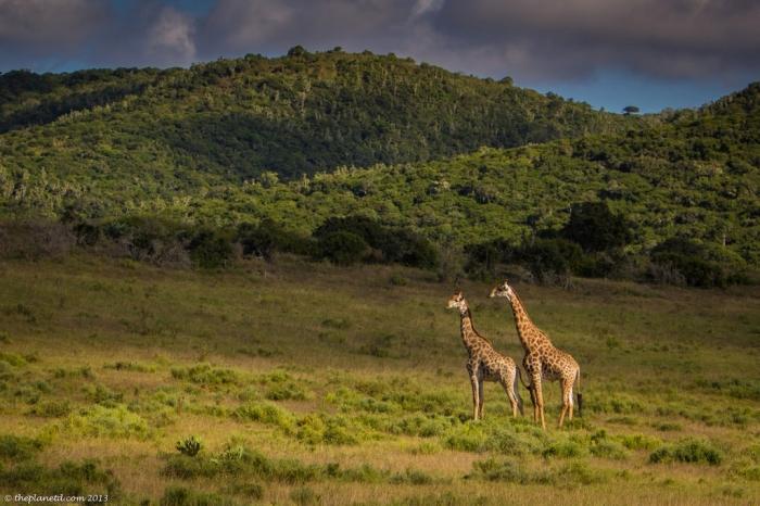 Wildlife-South-Africa-3-XL