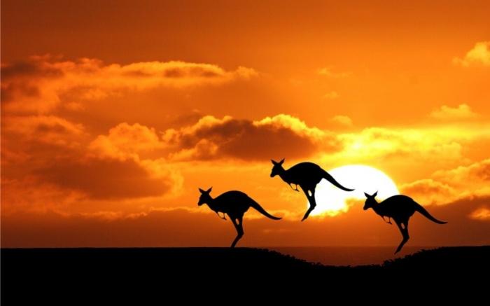 Australia-The-Sun-Silhouettes-Kangaroos