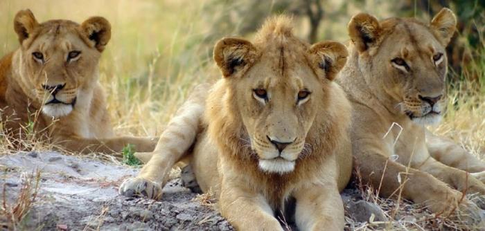 Dar es Salaam, Tanzania tanzania-safari-package-top