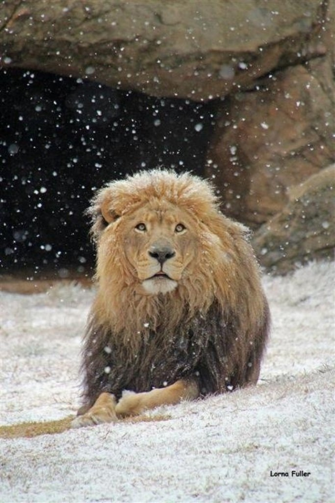 Johannesburg, South Africa snow-johannesburg-1