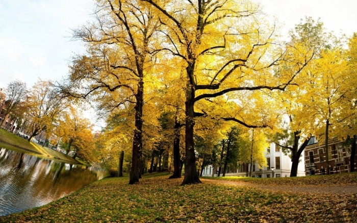 Yellow-Trees-Sunny-Autumn-Netherlands-Landscape-