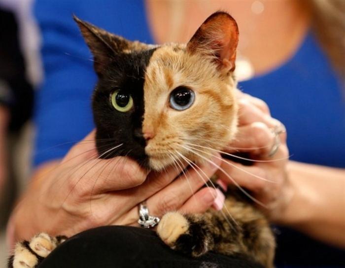 venus-cats1