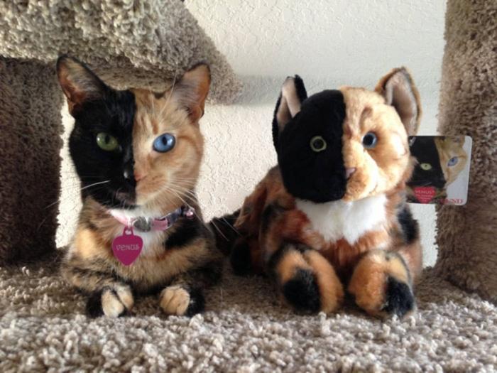 venus-the-cat1
