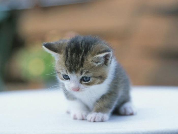 صورة_القططصور_p
