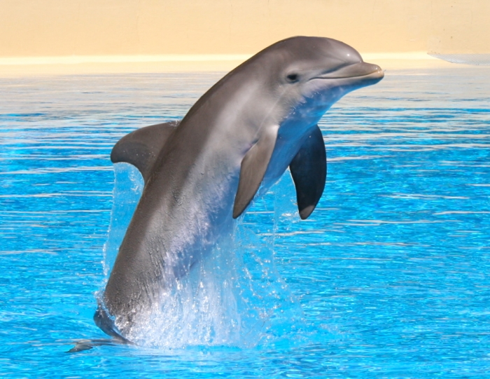 K2-Dolphin-Mirage-Dolphin-Habitat