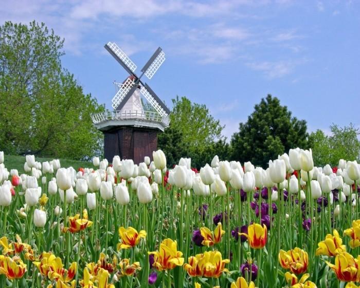 Netherlands holland_tulip_festival_michigan-1280x1024