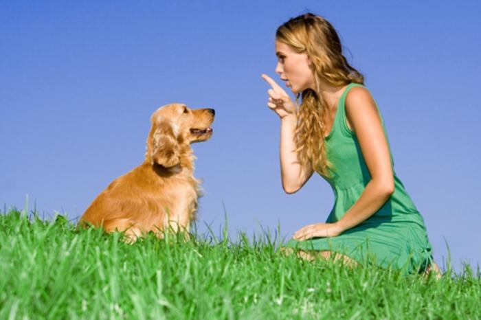 animal-communicator