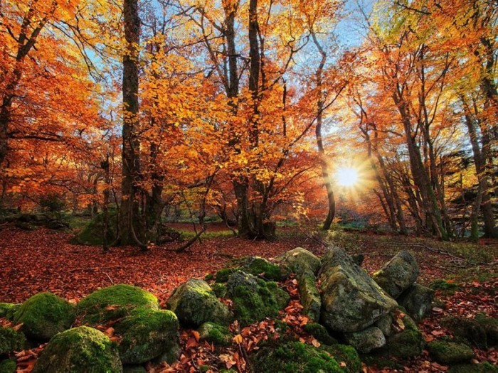 landscapes_nature_trees_forest_fields_france_autumn_1024x768_35856