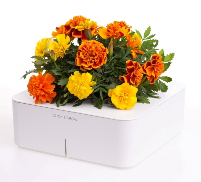 Smartpot from Click and Grow is the ideal solution for growing plants in your living room or office without exerting any effort or requiring any experience.