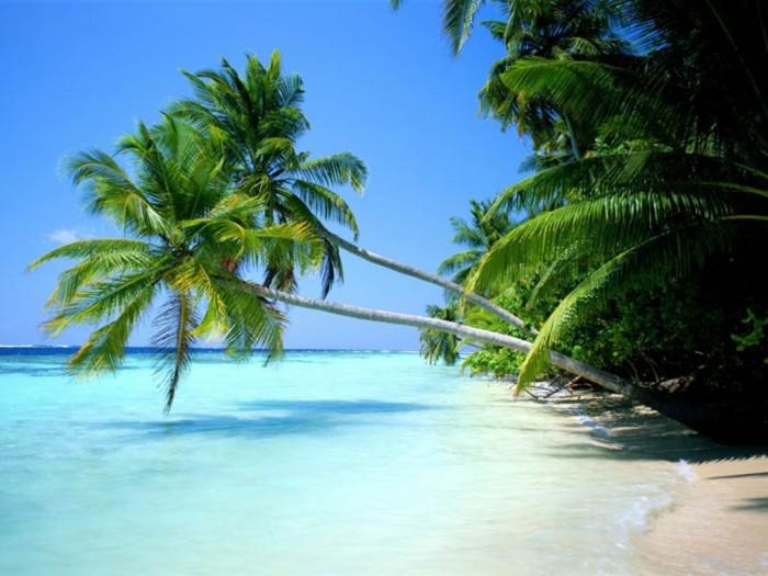 Beautiful-scenery-in-St-Kitts