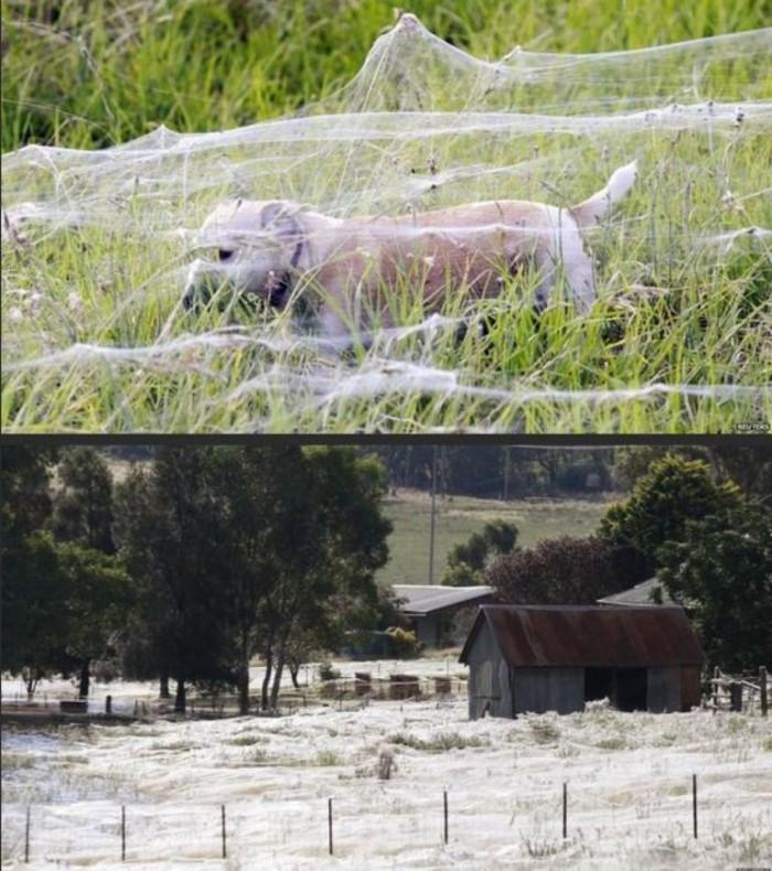 Fields of Webs