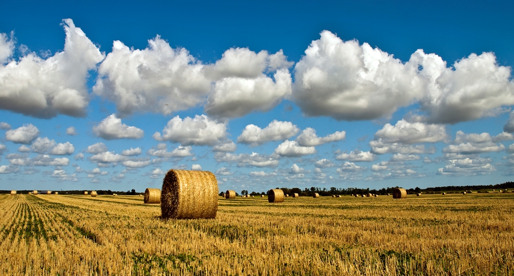 From_the_farm,_Gotland,_Sweden_(6197462414)