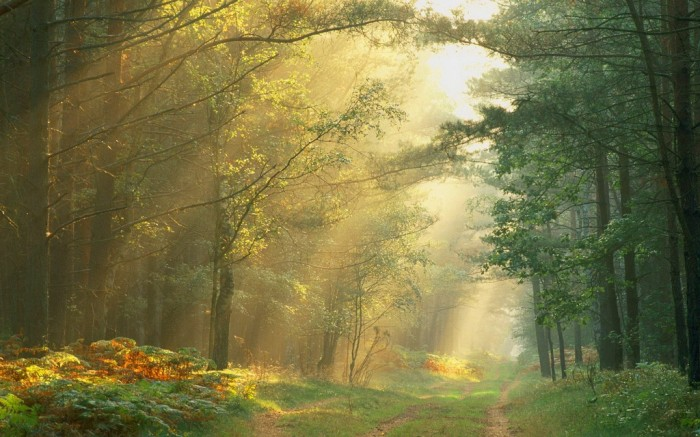 Germany nature-wallpapers-beautiful-freebies-forest-sun-germany