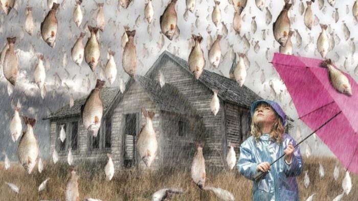 It is raining fish