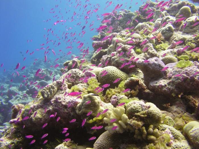 Marshall Islands underwater wonders-13a03693-62c1-4513-b960-327410d2bb65