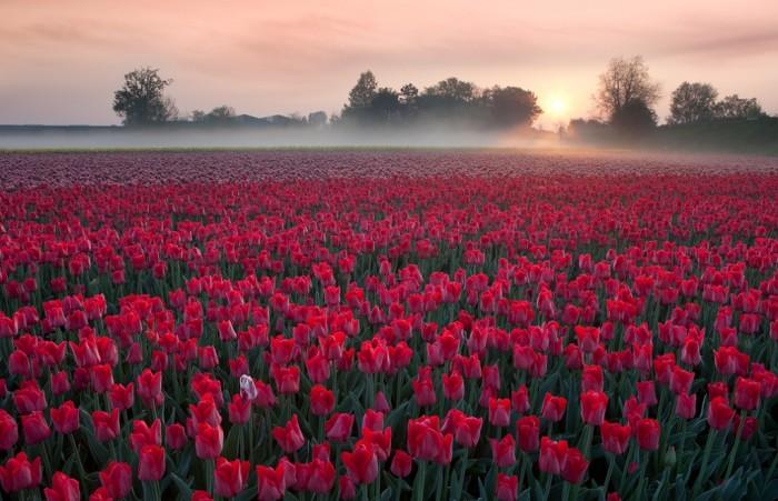 Netherlands netherlands_12_by_lonelywolf2-d5sl54m