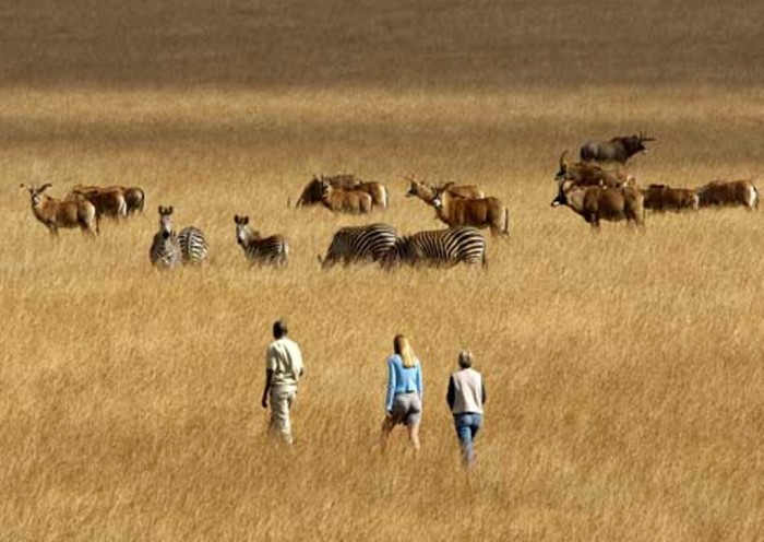 African animal community