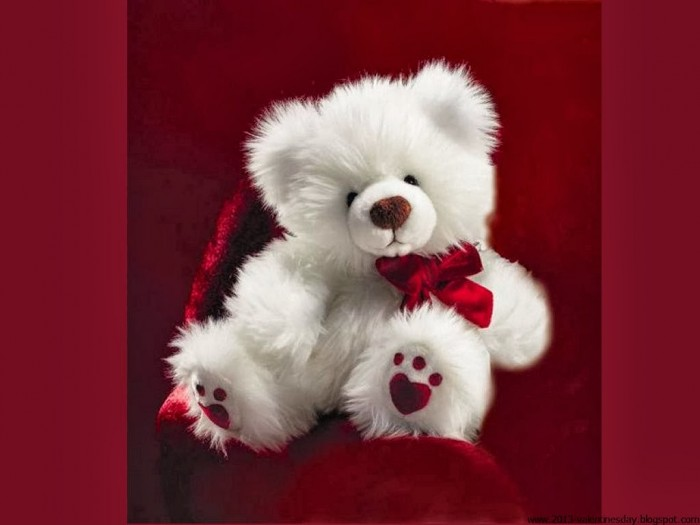 Sweet teddy bear Wallpapers