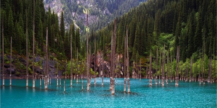 The underwater forest of Lake Kaindy