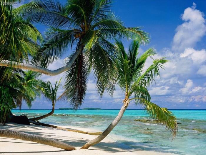 Tuvalu Island (5)