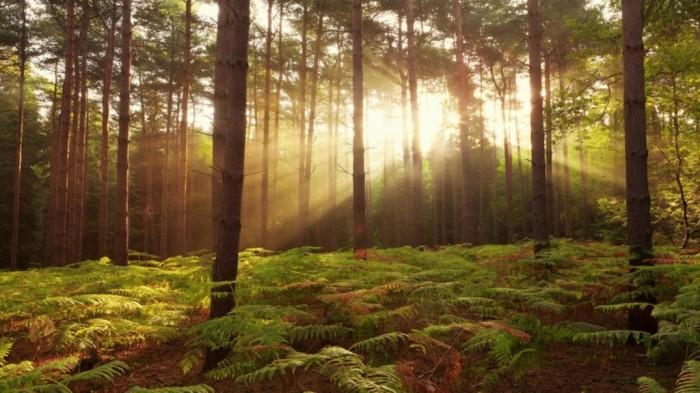 United Kingdom landscapes nature trees dawn forest photography united kingdom 2560x1440 wallpaper_www.wallpaperhi.com_5