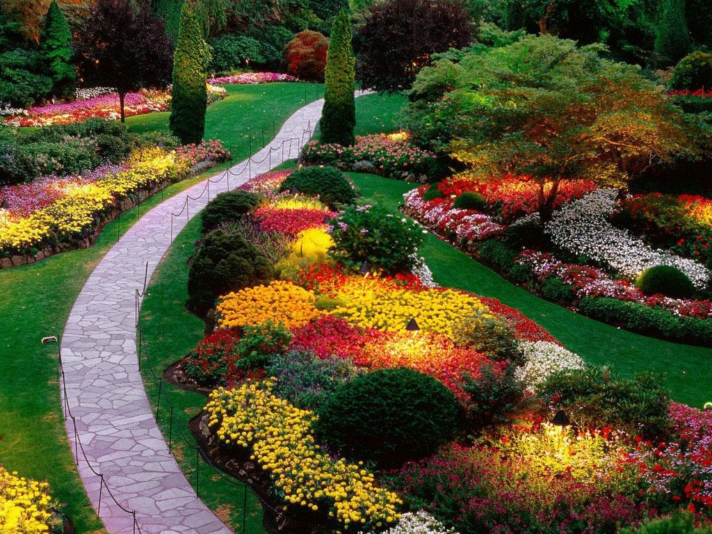 backyard-the-whole-backyard-design-blending-among-color-component-1024x768