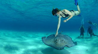 cayman stingray diving