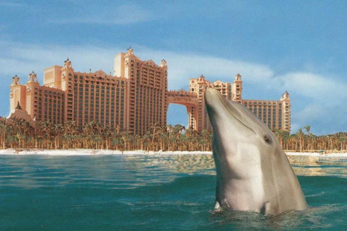 Atlantis_Paradise-Island_Dolphin-Cay