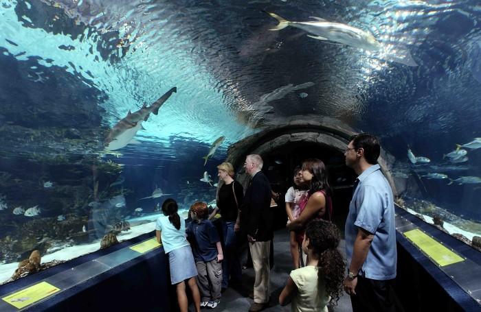 Camden-Aquarium