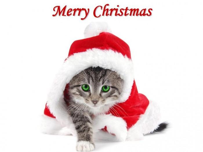Christmas-Kitten-Wallpaper