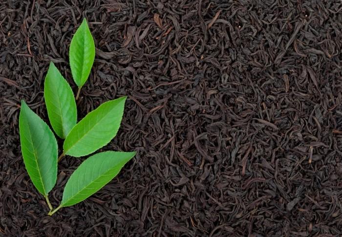 Green tea for diabetics