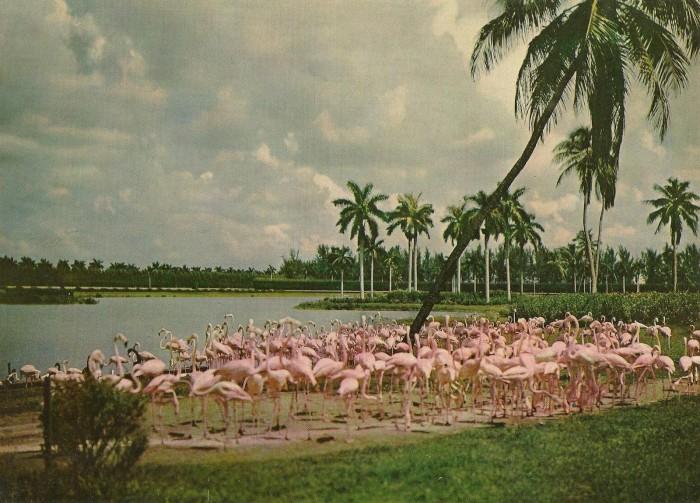 Hialeah Race Course, Miami (2)