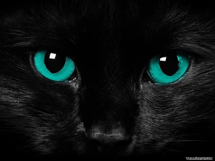 Scary_cat_eyes-1600x1200