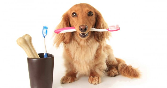 Photo of Top 10 Best Toothbrushes For Dogs