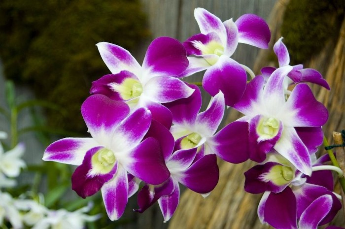 Top 10 Most Beautiful Flowers And Their Meanings