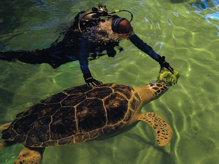 Aquarium-Turtle-Baltimore-Maryland