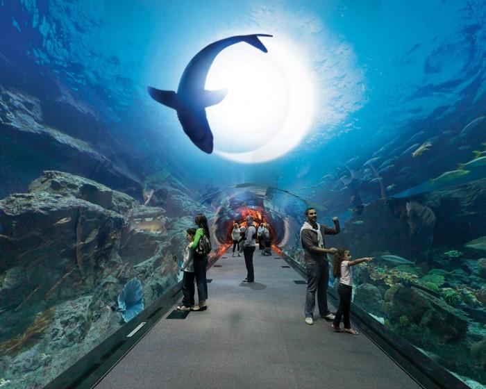 - Dubai Mall Aquarium