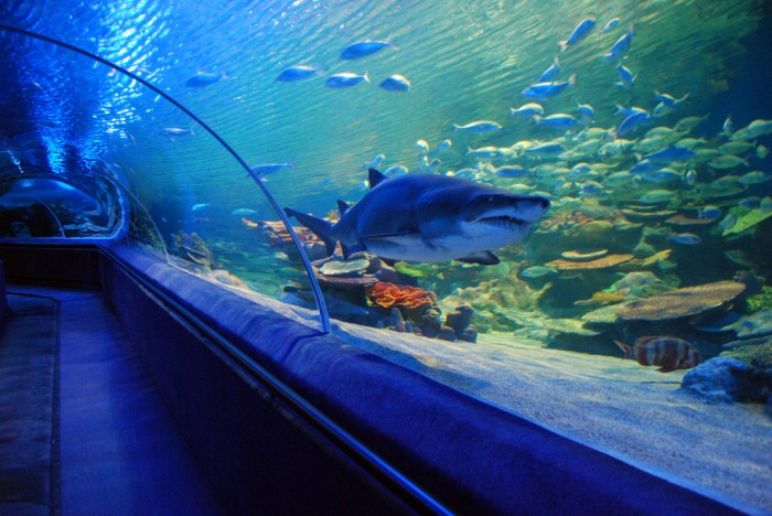 Photo of Top 10 Largest Aquariums In The World