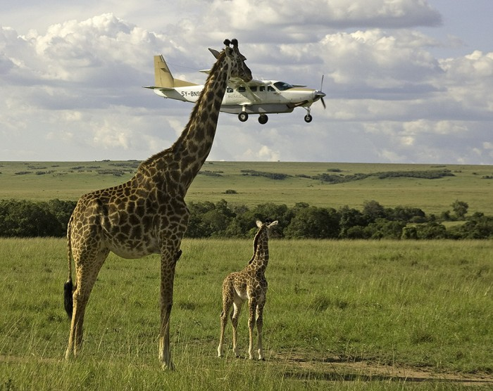 giraffe-and-light-aircraft