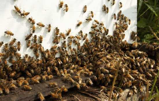 2598_killer-bees-4_04700300